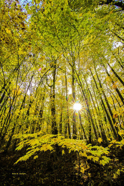 Photograph - Fall Sunburst by Dale R Carlson