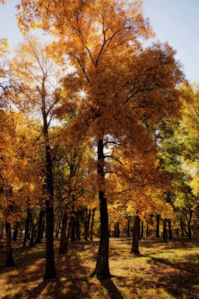 Photograph - Fall Sunshine by Scott Bean