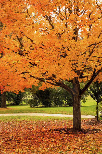Photograph - Fall Tree by Don Johnson