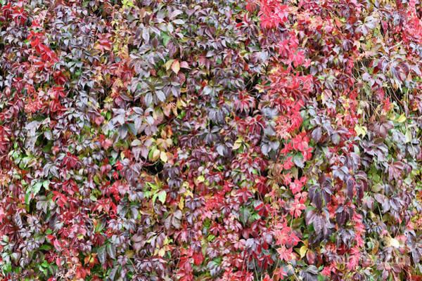 Photograph - Fall Wall  by Carol Groenen
