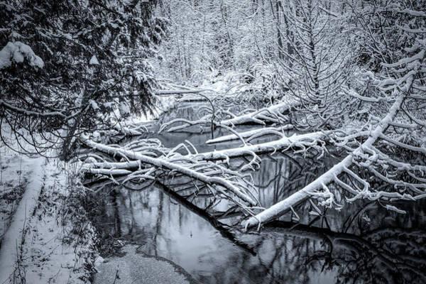 Photograph - Fallen by David Heilman