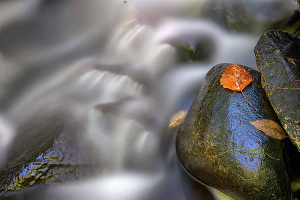 Photograph - Fallen Leaf And Mountain Stream by Rick Berk