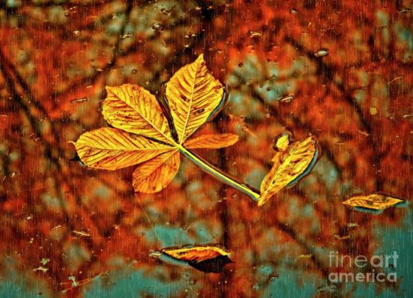 Photograph - Fallen Leaves And Reflections by Martyn Arnold