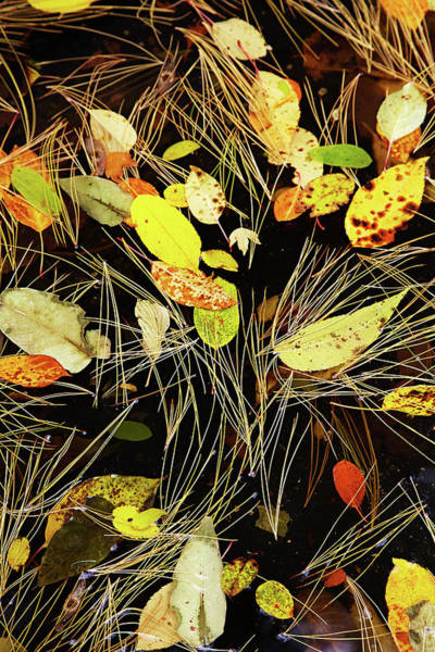 Photograph - Fallen Leaves by Garden Gate magazine