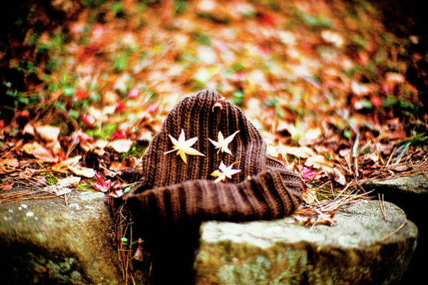 Knit Hat Photograph - Fallen Leaves by Moaan