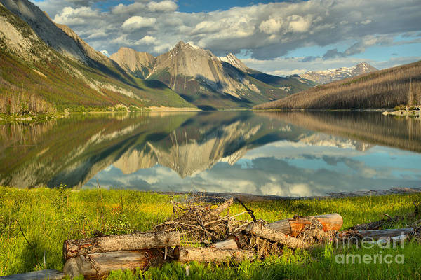Photograph - Fallen Logs At Medicine Lake by Adam Jewell