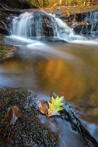 Photograph - Fallen Oak Leaf In Vaughan Woods by Rick Berk