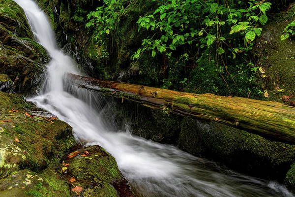 Photograph - Fallen Tree Waterfall by William Dickman