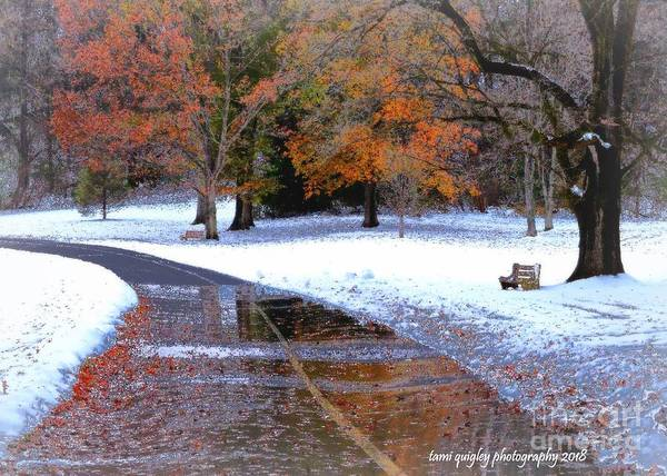 Photograph - Falling Into Winter  by Tami Quigley