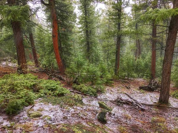 Photograph - Falling Snow On Fillius Ridge by Dan Miller