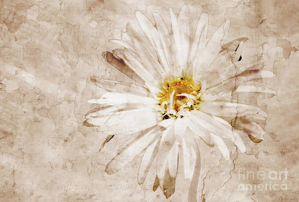 Aster Photograph - Fallow Brown by John Edwards