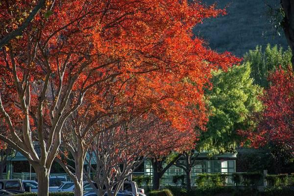 Photograph - Fall's Blaze by Lynn Bauer