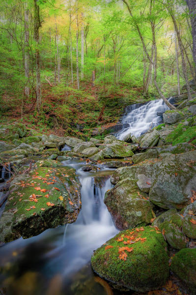 Photograph - Falls Brook 2 by Bill Wakeley