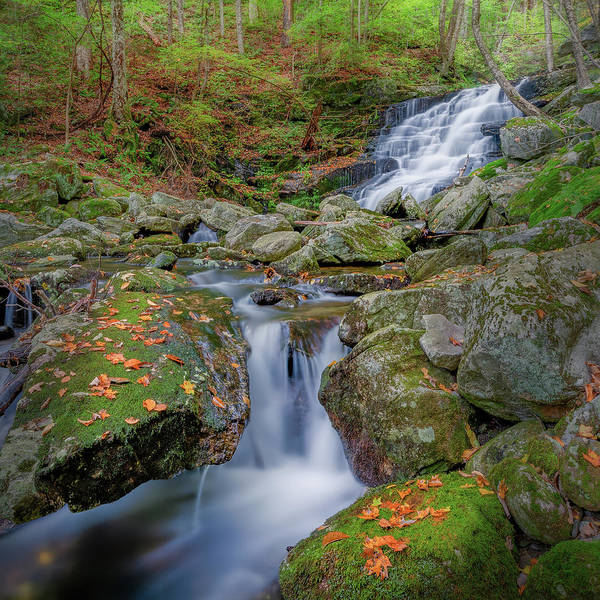 Photograph - Falls Brook 2 Square by Bill Wakeley