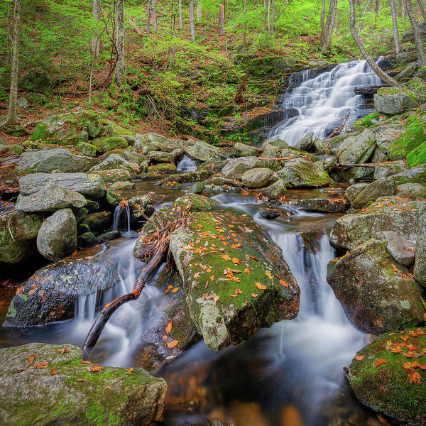 Photograph - Falls Brook 2018 Square by Bill Wakeley