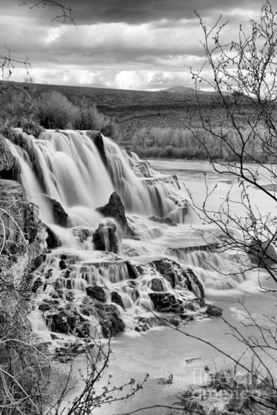 Photograph - Falls Creek Falls Through The Brush Black And White by Adam Jewell