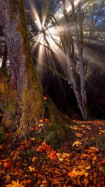 Photograph - Fall's Light by Jason Brooks