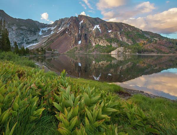 Photograph - False Hellebore Ellery Lake, Inyo by Tim Fitzharris
