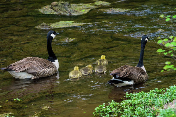 Wall Art - Photograph - Family Outing by Jennifer White