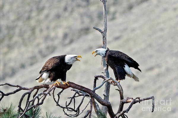 Wall Art - Photograph - Family Squabble by Mike Dawson