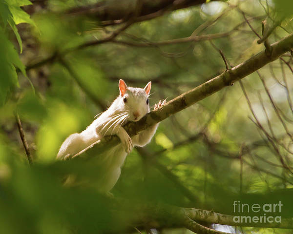 Photograph - Famous Brevard White Squirrel by Kevin McCarthy