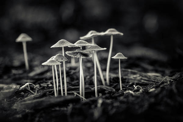 Growth Photograph - Fanciful Fungus-2 by Tom Mc Nemar
