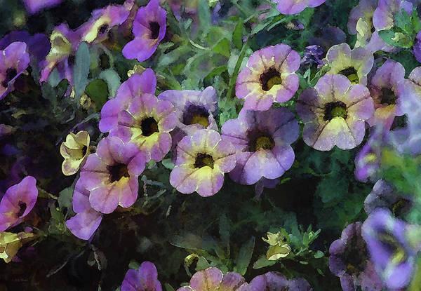 Photograph - Fancy Petunias 6461 Idp_2 by Steven Ward