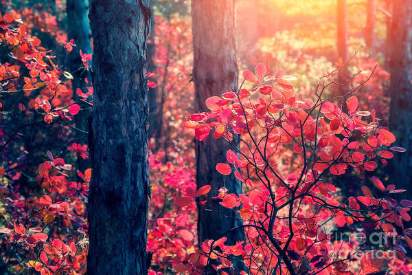 Fantastic Forest With Cotinus Art Print