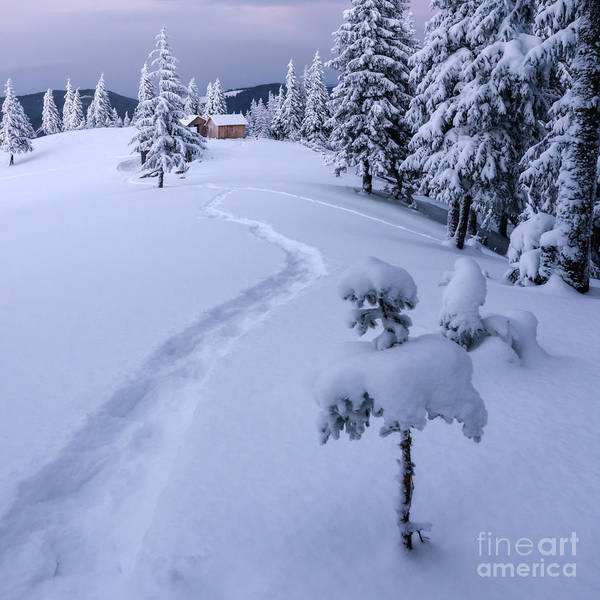 Wall Art - Photograph - Fantastic Winter Landscape With Snowy by Smit