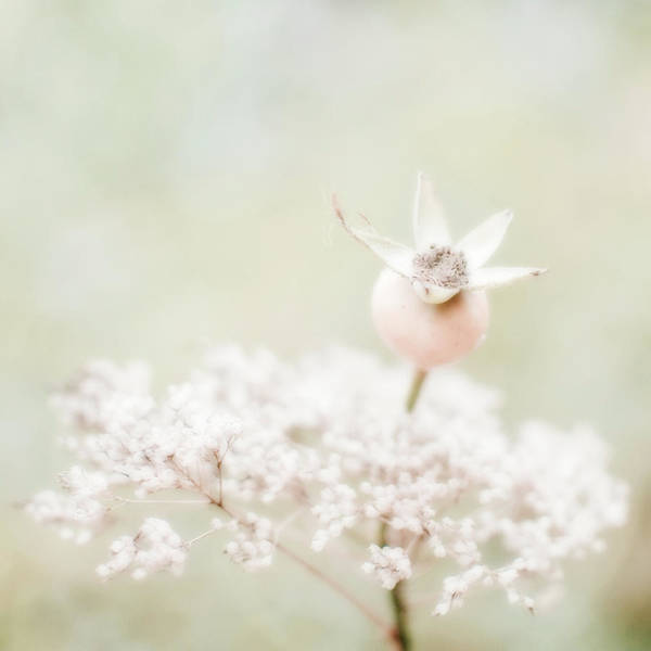 Hip Photograph - Fantasy Character Made Of Rose Hip And by Alexandre Fp