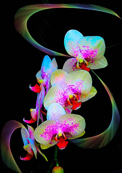 Photograph - Fantasy Orchids In Full Color by Rosalie Scanlon