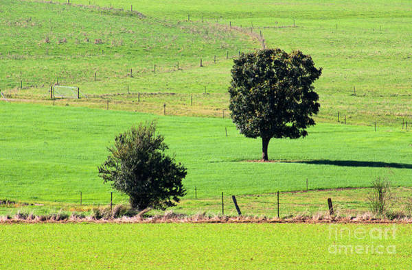 Photograph - Farm Fencing In Tawonga by Joy Watson