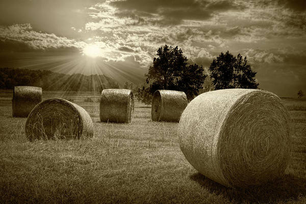 Photograph - Farm Field With Hay Bales At Sunrise In Sepia Tone by Randall Nyhof