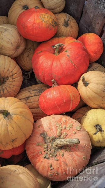 Wall Art - Photograph - Farm Fresh Pumpkins Plainfield Nh 16x9 by Edward Fielding