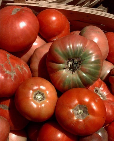 Photograph - Farm-grown Tomatoes In New Paltz, N.y by New York Daily News Archive