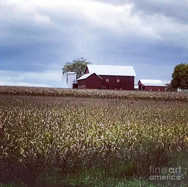 Photograph - Farm Life by William Norton