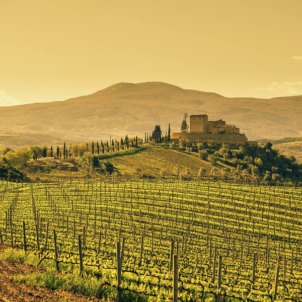 Photograph - Farm Tuscany Vineyard by Deimagine