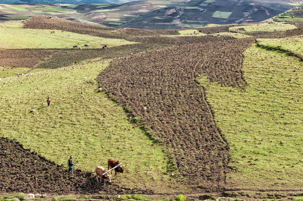Working Photograph - Farmer Working His Field, Simien by Gabrielle & Michel Therin-weise / Robertharding