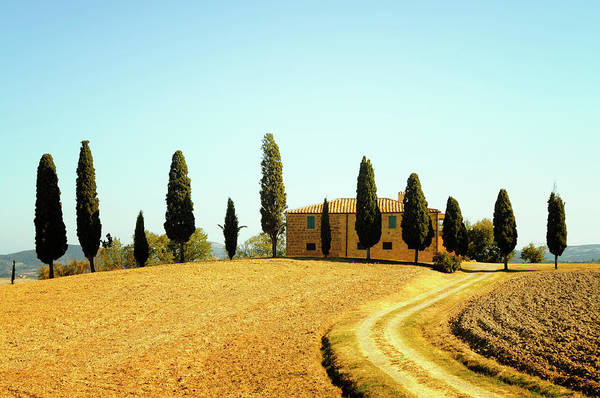 Cultivate Photograph - Farmhouse And Cypress Trees by Lisa-blue