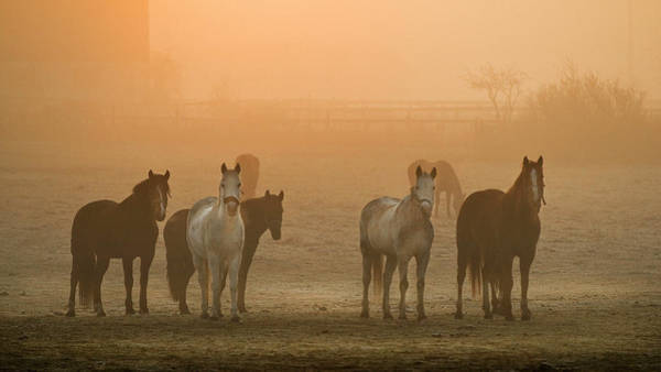 Wall Art - Photograph - Farming Dawn by Insight Imaging