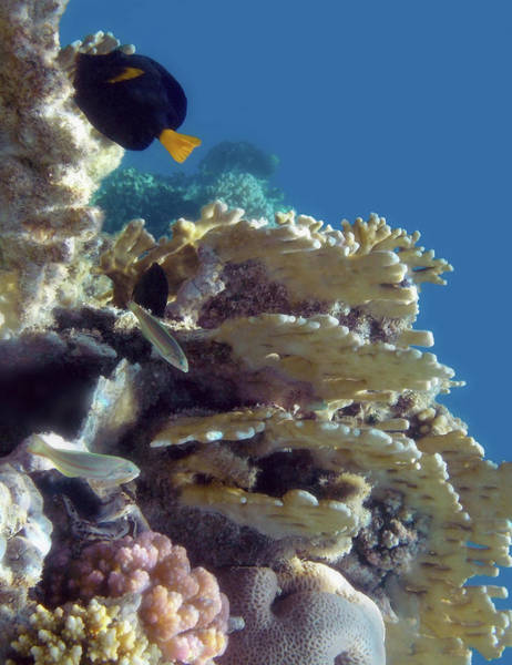 Photograph - Fascinating Exciting Red Sea Underwater World by Johanna Hurmerinta