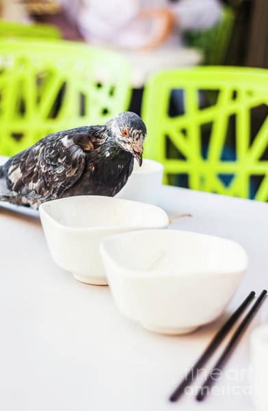 City Cafe Wall Art - Photograph - Fast Food Asian Pigeon by Jorgo Photography - Wall Art Gallery