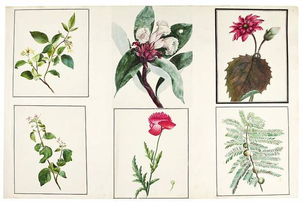 Wall Art - Painting - fauna and flora studies, India, Murshidabad, Company School, late 18th early 19th century 3 by Celestial Images