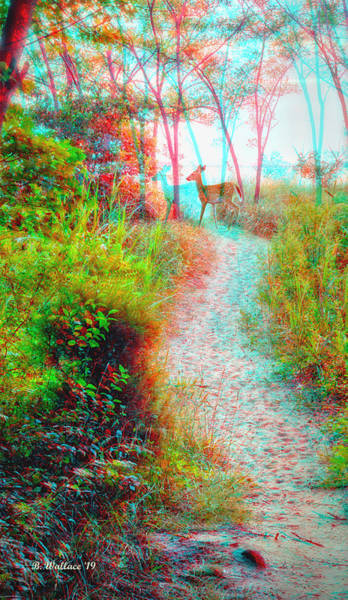 Stereoscopy Digital Art - Fawn On The Path 3d Stereo Anaglyph by Brian Wallace