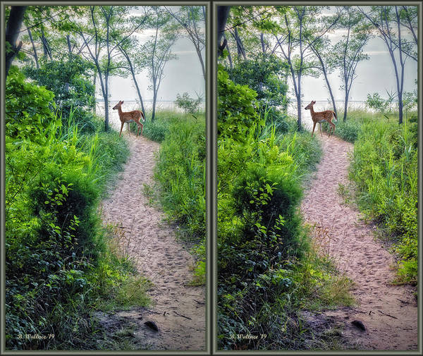 Wall Art - Digital Art - Fawn On The Path 3d Stereo Xview by Brian Wallace