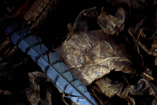 Photograph - Feather And Leaf by Jeff Phillippi
