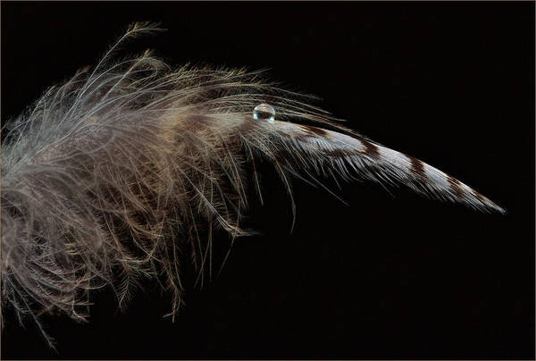 Photograph - Feather Balancing Act by Jean Noren
