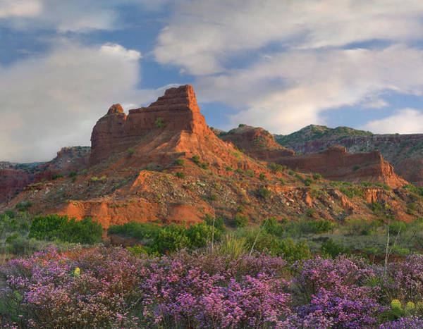 Photograph - Feather Dalea, Caprock Canyons State by Tim Fitzharris