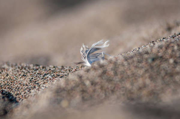 Photograph - Feather by Dan Urban