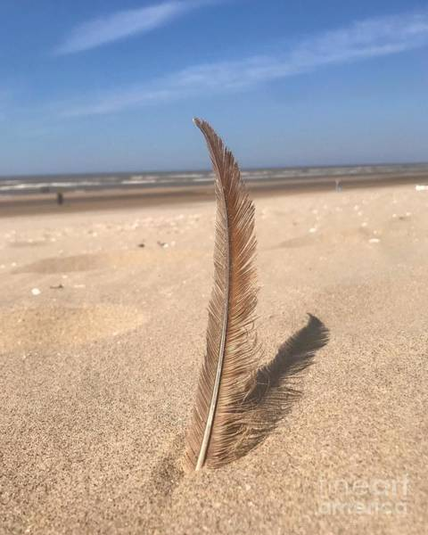 Wall Art - Photograph - Feather In The Sand by Jeepee Aero
